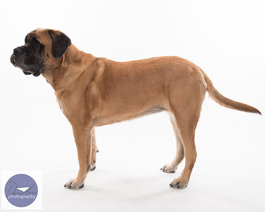 Taylor dogs set 2-9281