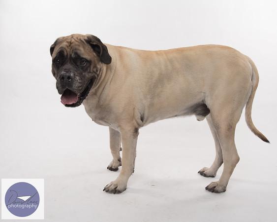 Taylor dogs set 2-9316