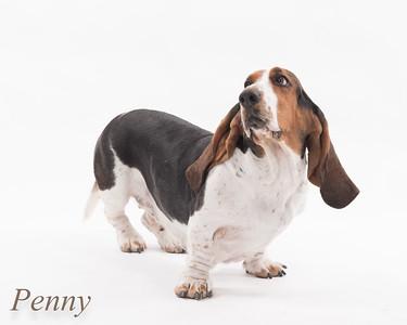 Penny finals-