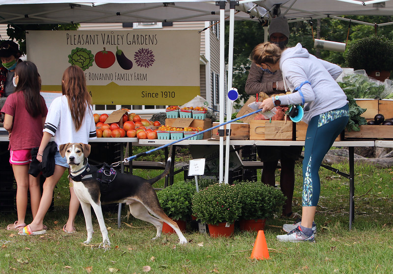 Second last Tuesday Tewksbury Community Market, at the field across from the Tewksbury Public Library. The last market will be Tuesday, Sept. 22, 4-7pm. Erin Bradley of Tewksbury shops for vegetables at the Pleasant Valley Gardens booth, with her dog Keno. (SUN/Julia Malakie)