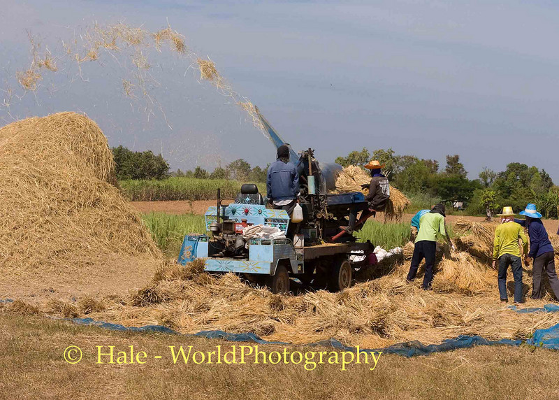 Flying Rice Chaff, Isaan Thailand