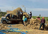 Threshing Crew, Isaan Thailand Outside Tahsang Village