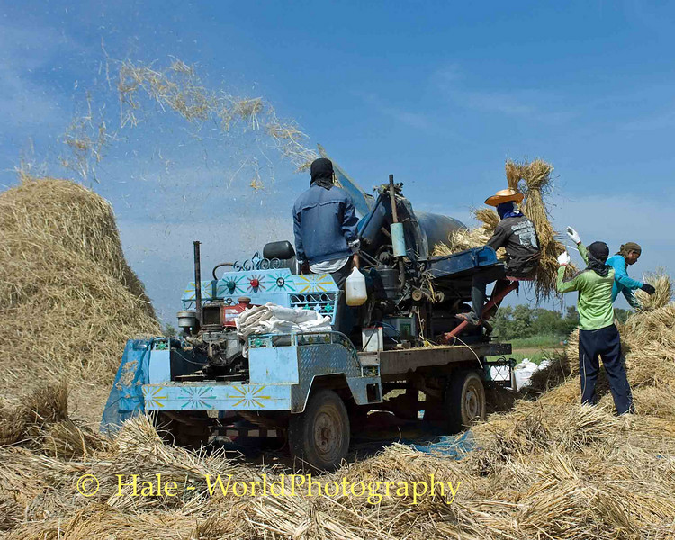 The Rice Chaff Is Flying, Isaan Thailand