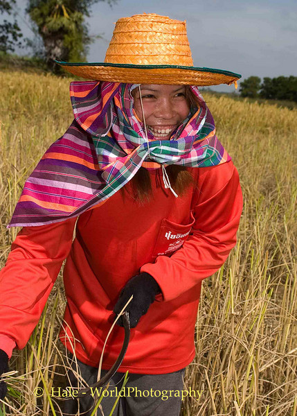 Smiling While Harvesting, Isaan Thailand