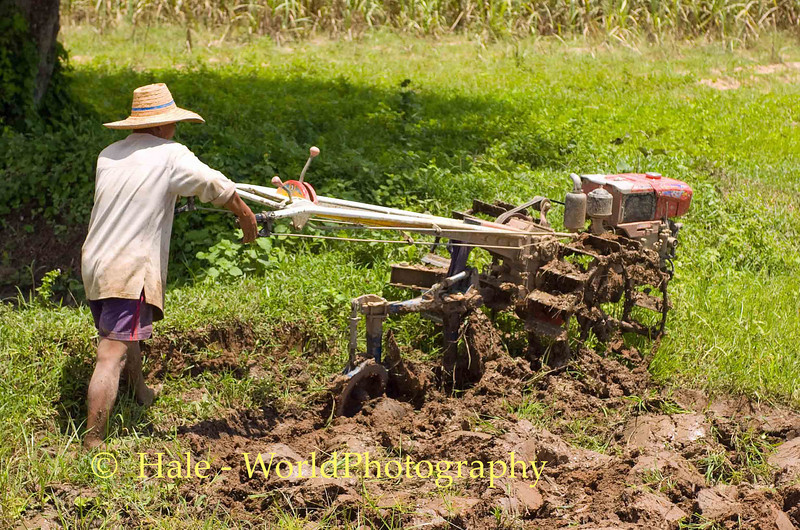 Plowing New Ground for Rice, Isaan Thailand