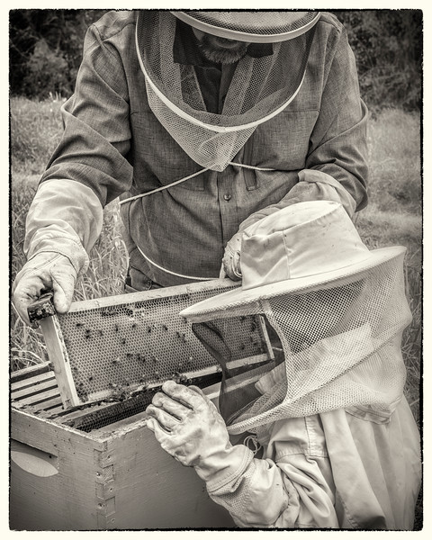 """The Bee Keeper's Son"" - No. 9 in the Series"