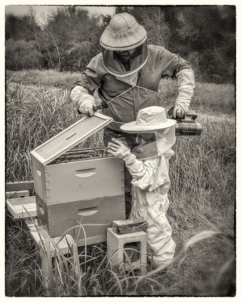 """The Bee Keeper's Son"" - No. 8 in the Series"