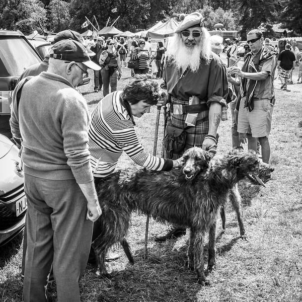 Dog Admiration