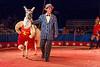 Circus Llama