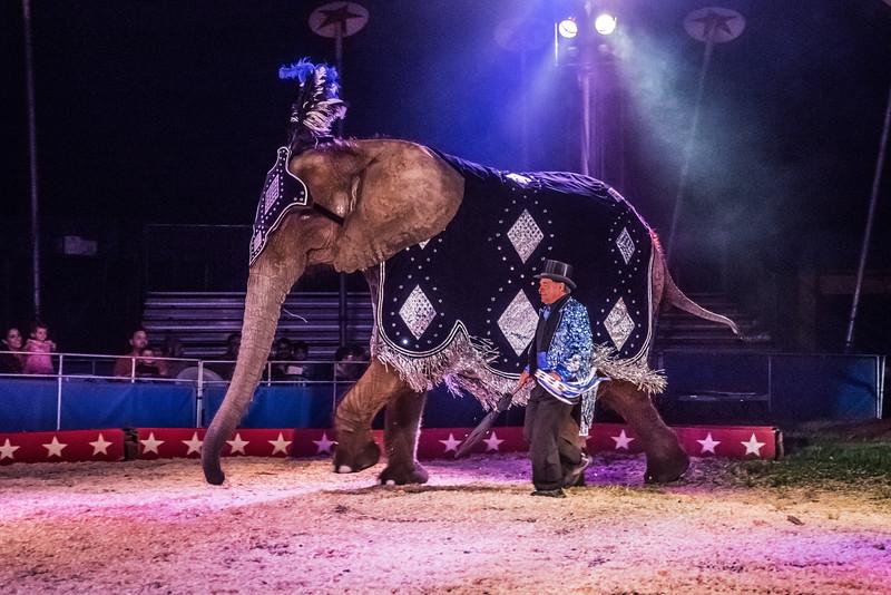 Circus Elephant 1