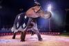 Dancing Elephant 2