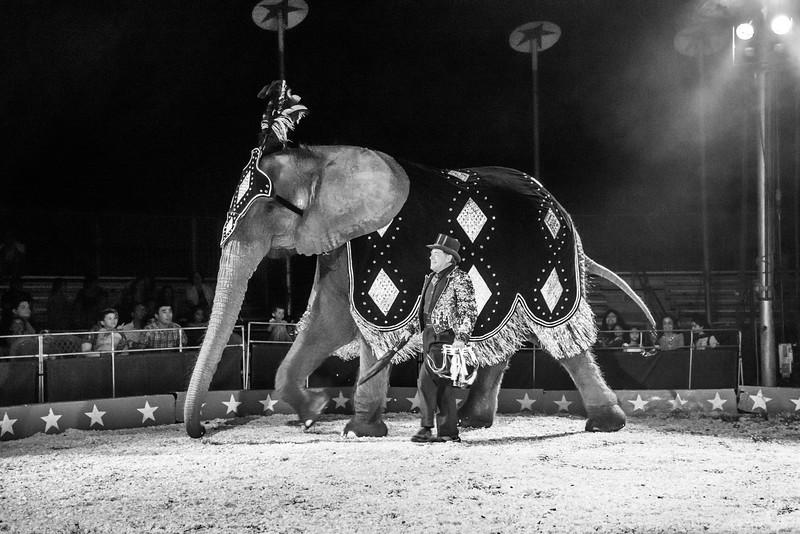 Circus Elephant 2