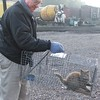 Neal, trapping a railyard cat for neutering and vaccinations before returning to railyard