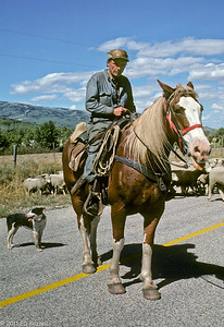 The Sheepherder 1977