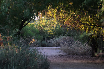 108-in-the-shade---gilbert-arizona---3538_14330714319_o