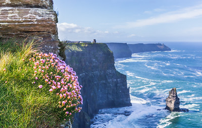 Spring Blossoms at the Cliffs of Moher