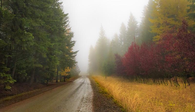 Misty Morning in Autumn
