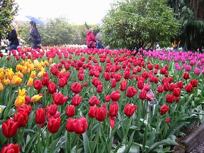 2003-04-13 - Biking the Tulip Festival