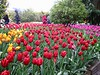 2003-04-13 A-bed-of-tulips-at-the-Roozengaarde-near-Mt-Vernon