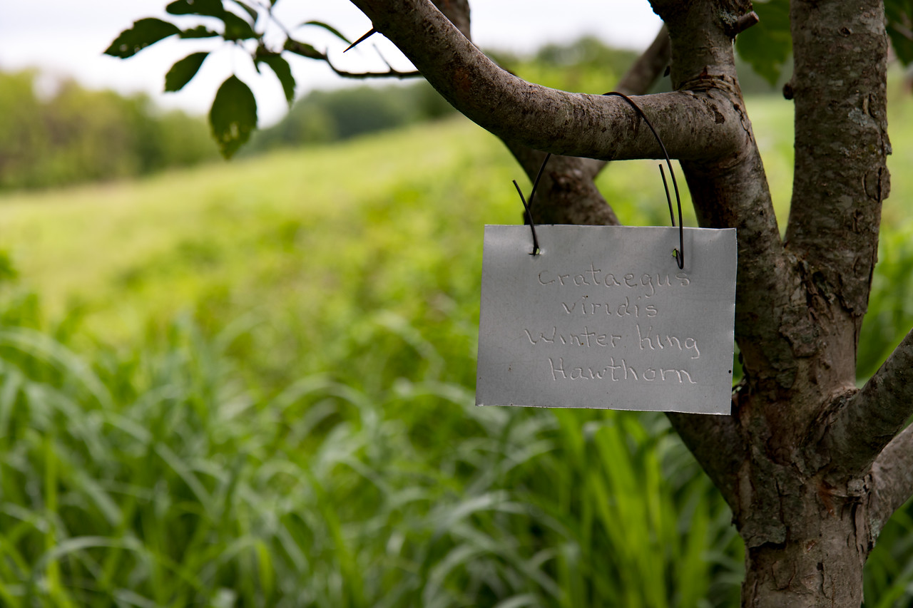 Treesdale Garden-218