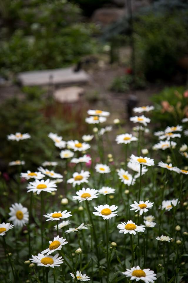 Treesdale Garden-184