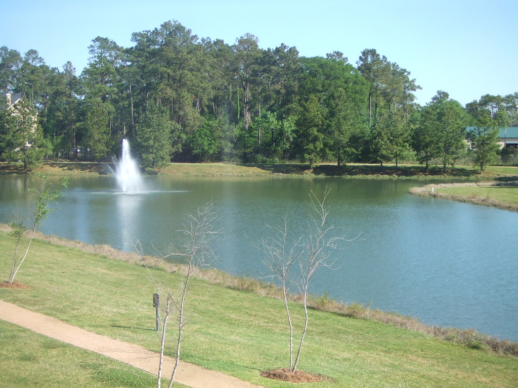 View of pond from the apartment