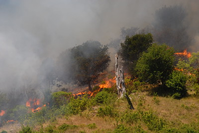 © Joseph Dougherty.  All rights reserved.   From Tunnel Road, the flames could be seen licking up the ridge toward the condos in the Hiller Highlands neighborhood. CDF ground crews labored to access the steep hillside and get hoses strung down over the uneven terrain.