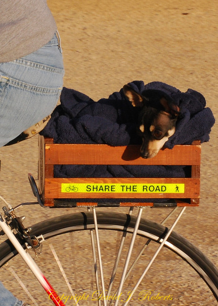 Share the road pooch