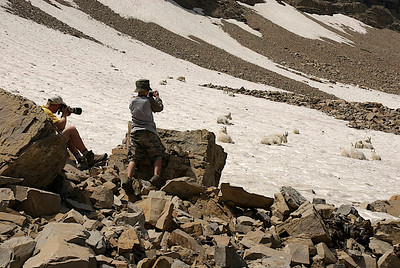 family photographing mountain goats on snowy mountain slope