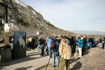 Viewers gather to watch goats at the 2010 Mountain goat Watchable Wildlife event.  Photo by Scott Root, Utah Division of Wildlife Resources