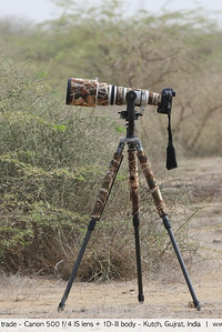The tools of the trade - Canon 500 f/4 IS lens + 1D-III body - Kutch, Gujrat, India
