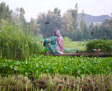 Harvesting Vegetables
