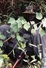 Guard, Bwindi Impenetrable Forest, Uganda