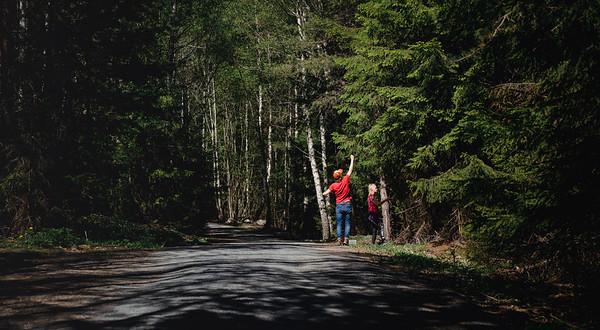 Gathering of Spruce