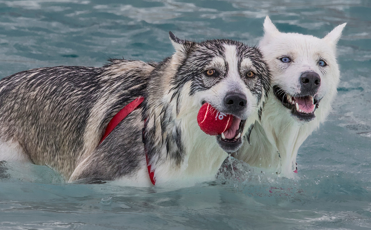 Hays YMCA on Dog Day.