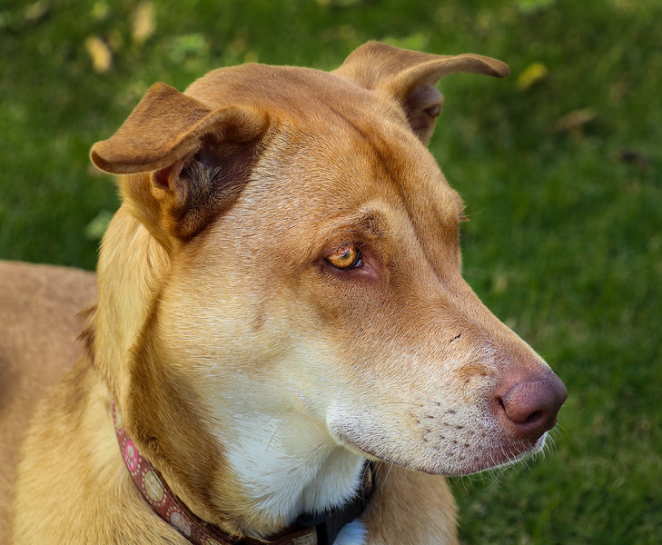 Rozzie the Wonder Dog
