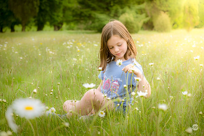 Counting meadow daisies