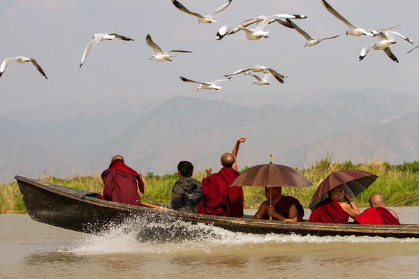 Buddha's birds