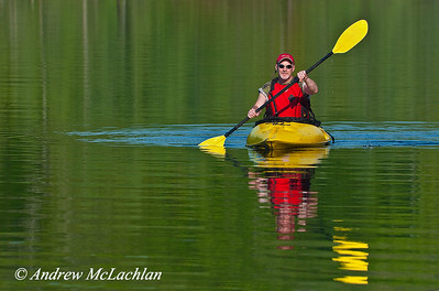 Adult Male Kayaking in Muskoka, Ontario, Canada