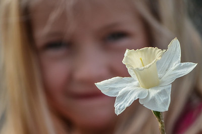 A Girl Holding a Dafodil