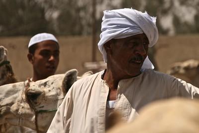 Birqash Camel Market | Cairo - Egypt | July 2011 |