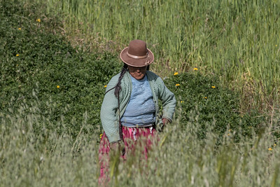 Uros woman working in the field