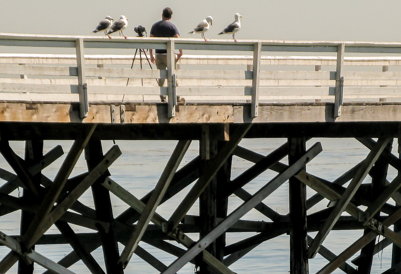 Wildlife Photographer,  The Pier, Paradise Cove, Malibu