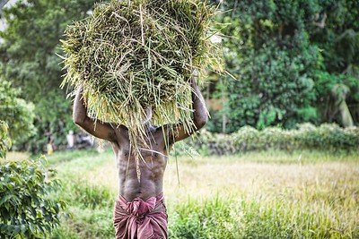 Man Carrying Rice