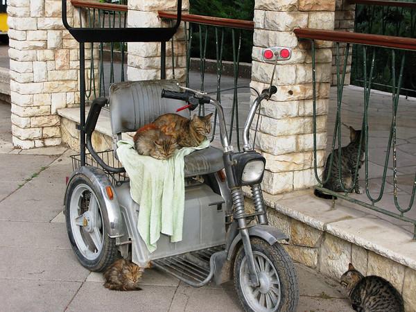 Kibbutz Cats, Kibbutz Deganya Bet, Tiberias, Israel