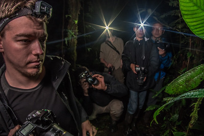 Biologists and members of a the Peruvian Biodiversity survey observe and take photos of a enigmatic glass frog species as it perches on a leaf in the nighttime jungle.  Boots on the ground research like this is critical to gathering baseline data on species' distributions, populations status and other trends to inform conservation work.