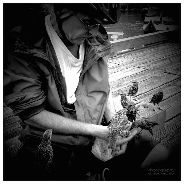 Feeding Starlings