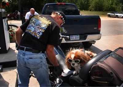 biker_dog