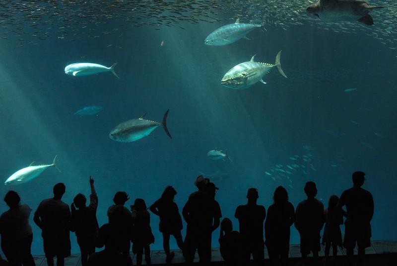 Monterey Bay Aquarium, Monterey, California