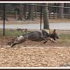 20110201-IMG_9594Chestnut Park